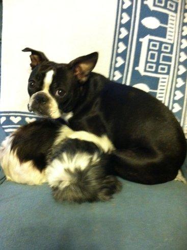 Gert lying on her Gabby in 2011.